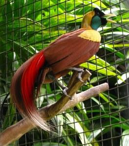 oiseau-de-paradis-1