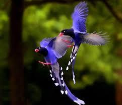 oiseauxjpg