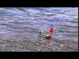 les roses de Saadi 2jpg