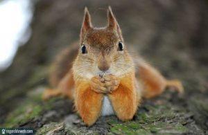 Ecureuil qui fait sa prière