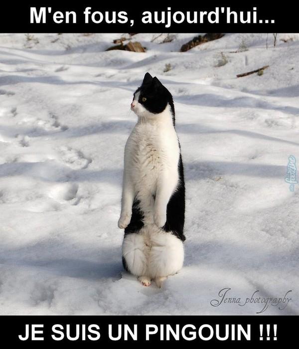 chat-pingouin