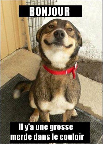 gentil chien